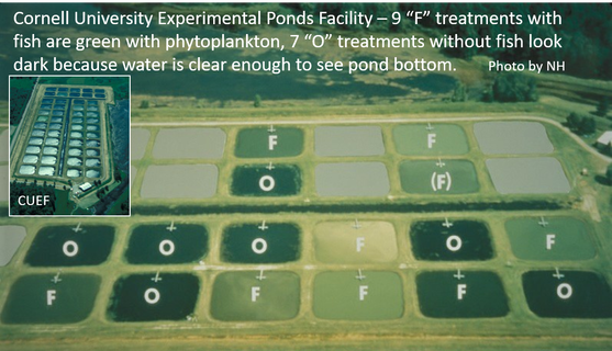 Aerial photo of Cornell Experimental ponds during experimental manipulation of fish presence or absence
