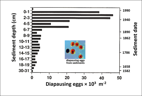 Depth distribution of copepod diapausing eggs in Bullhead Pond sediments